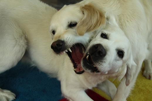 Individualdistanz bzw. Intimdistanz - Blog / Institut für Hundegestützte Psychotherapie (IHPt)