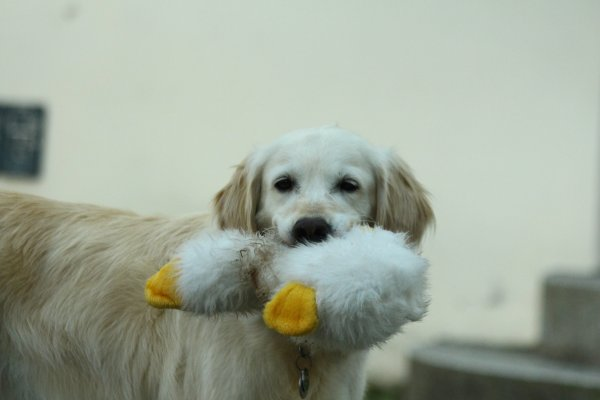 Nein-Sagen-Können - Blog / Institut für Hundegestützte Psychotherapie (IHPt)