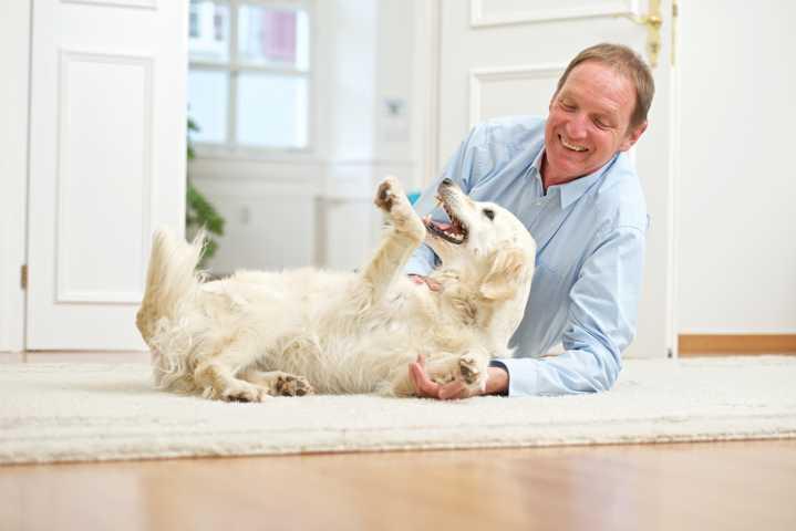 Zerrspiele in der Psychotherapie? - Blog / Institut für Hundegestützte Psychotherapie (IHPt)