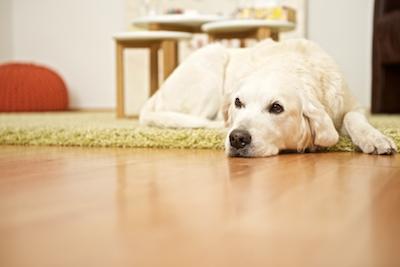 Darf ein Therapiehund bellen? - Blog / Institut für Hundegestützte Psychotherapie (IHPt)